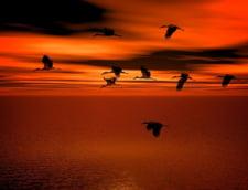 Fotografia zilei: Flamingo de Fundata