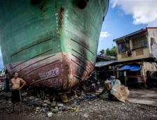 Fotografia zilei: Viata dupa catastrofa
