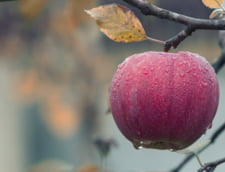 Franta si Germania cer un buget echilibrat post-Brexit in domeniul agriculturii