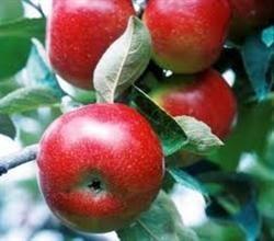 Fructe care taie pofta de mancare