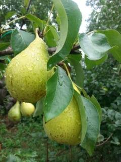 Fructe si legume care te pot ingrasa - ce trebuie sa alegi in schimb