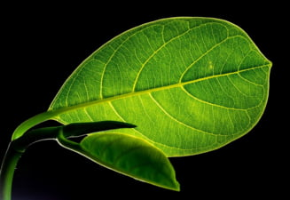 Frunza artificiala care transforma CO2 in combustibil ieftin