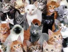 Furturi misterioase in Paris: 20 de pisici, disparute fara urma. Recompensa gasitorului: 10.000 de euro