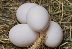 Gaini modificate genetic, in lupta cu cancerul. Ce contin ouale lor