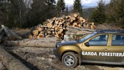 Garda Forestieră Suceava a descoperit fapte ilegale pe raza ocolului silvic Dealu Negru, unde au fost agresați doi jurnaliști și un activist de mediu