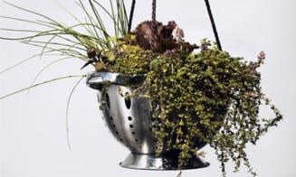 """Gaseste-le plantelor de interior o noua """"locuinta"""""""