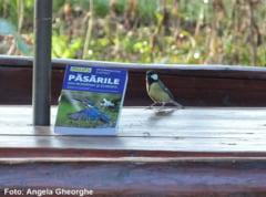 Ghid despre pasarile salbatice, publicat de Societatea Ornitologica Romana