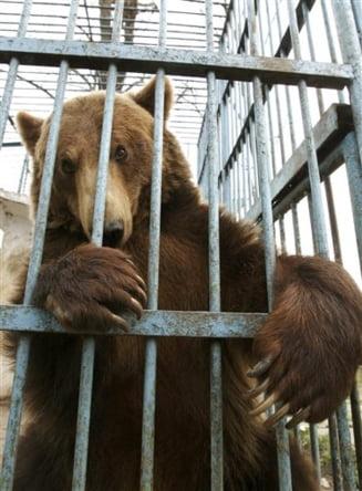 Gradinile zoologice din Romania, pericol pentru animale si vizitatori