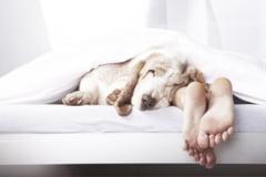 Greseli comune, care iti afecteaza somnul - alarma amanata, numaratul oilor