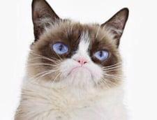 Grumpy Cat a castigat in instanta 710.000 de dolari de la un producator de cafea