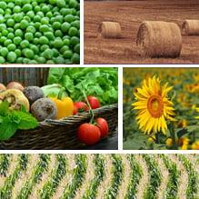 Grupul BURSA, un nou eveniment dedicat agriculturii romanesti. Cum sa se descurce fermierii in timpul pandemiei de COVID-19, printre teme