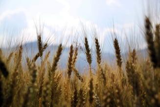 Guvernul face la Buzau o banca de seminte, in valoare de 65 de milioane de euro. Nelu Barbu: Este o decizie istorica!