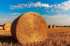 Guvernul ocoleste legea data de PSD si face posibila vanzarea de terenuri agricole, dar numai pentru o parte dintre ele