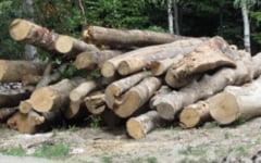Haihui cu drujba prin paduri... / La furat de lemne