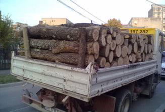 Hoti de lemne, prinsi de politistii argeseni! Au fost date amenzi de 33.000 de lei