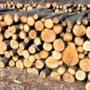 Hoti de lemne, prinsi si amendati de politistii argeseni