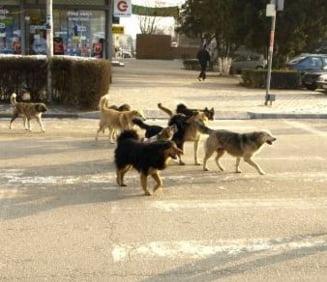Huffington Post: Doua americance, fugarite de caini in Romania