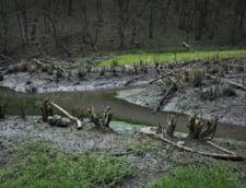 IGSU: 53 de case si 200 de curti inundate in ultimele 24 de ore. Pompierii au intervenit