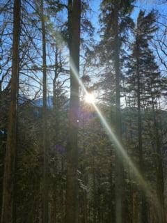 Iarna ramane mult prea blanda: ANM anunta cu 5 grade peste normal si in februarie