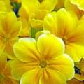 Iata dovada ca florile pot auzi! Experimentul care nu lasa loc de dubii