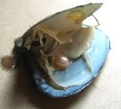 Idee de afaceri eco - Ferma de perle