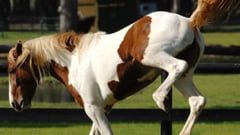 Iesean cu splina rupta, dupa ce a fost lovit de cal cu copita