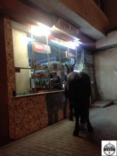 """Imagine rara la Iasi. Un cal, """"client"""" noaptea la non-stop, in Galata"""