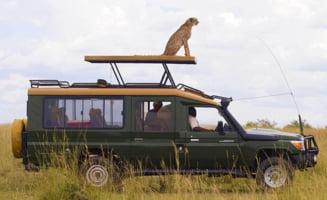 Imagini de senzatie din savana: Ce a patit un ghepard iesit la vanatoare (Galerie foto)