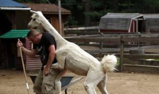 Imagini fabuloase: Ce-a patit un prezentator TV in prima zi de munca la Zoo (Video & galerie foto)