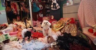 Imagini incredibile: Ce-a facut o femeie pentru cainele ei intrece orice imaginatie (Galerie foto)