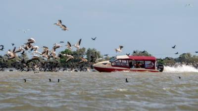 "Imagini revoltatoare cu o barca din Delta care intra cu viteza intr-un stol de pelicani. Val de indignare: ""Asta se intampla cand perimiti oricarui cretin sa faca excursii"""