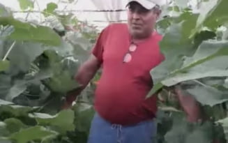 """Imagini virale. Un legumicultor nemultumit si-a distrus cultura de castraveti. """"Stim sa producem, dar prosti nu suntem!"""" VIDEO"""