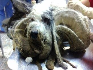 Imaginile care iti vor rupe sufletul: ce a patit un caine adorabil din cauza unor rusi (Galerie foto)