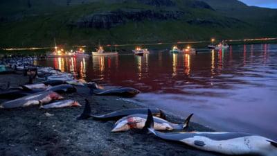 Imaginile cu ape pline de sânge după uciderea a peste 1.400 de delfini în Insulele Feroe au stârnit mânia activiștilor de mediu