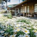 Importanta contactului cu natura din jurul caselor noastre