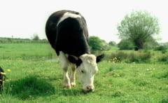 In 20 de ani, carnea din farfurie nu va mai proveni de la animale