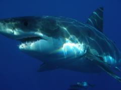 In 24 de ore, trei oameni au fost muscati de rechin pe o plaja din Florida
