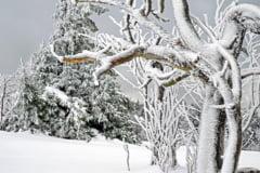 In Anglia, Scotia si Irlanda e cod rosu de vreme rea din cauza valului de frig siberian