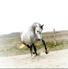 In Romania exista o pensiune pentru cai - Cat costa sa-ti lasi calul la relaxare