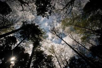 In Romania se afla cea mai mare suprafata de paduri virgine din Europa - Interviu cu WWF
