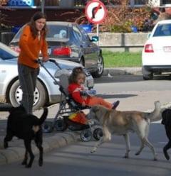 In SUA, cainii fara stapan sunt eutanasiati in 3 zile. In Romania omoara oameni - Interviu