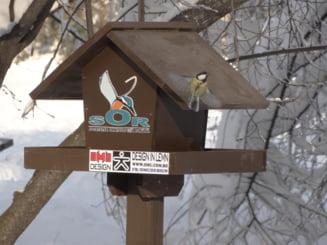 In parcurile din Bucuresti traiesc inclusiv papagali - E bine sau nu sa hranim pasarile pe pervaz? Interviu