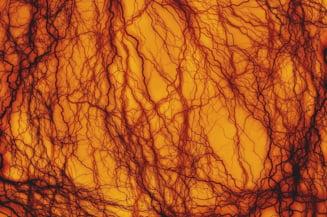 In premiera, au fost create vase de sange umane perfecte, in laborator. Ar putea ajuta la vindecarea unor boli grave