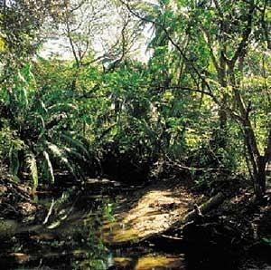 Inamicul padurilor tropicale: biocombustibilul