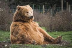 Inca o pagina despre ursi