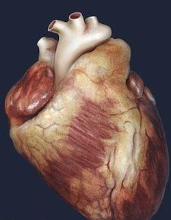 Inca putin si ne vom crea in laborator organele pentru transplant