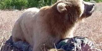 Inca un om atacat de urs in Harghita