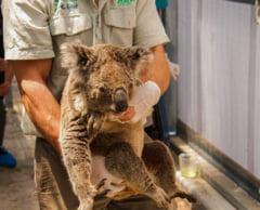Incendiile din Australia: Sute de milioane de animale, poate chiar miliarde, au murit mistuite de flacari