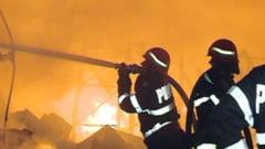 Incendiu devastator la o ferma din Satu Mare: 4.000 de porci, arsi de vii