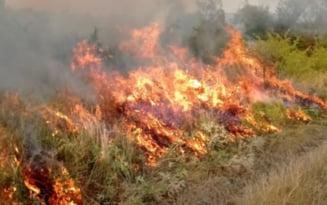 Incendiu masiv de vegetatie, extins la mai multe gospodarii din Mehedinti. Peste 45 de pompieri intervin pentru stingere